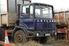 Leyland Bison tipper (fryske) Tags: abandoned rust tipper farm rusty scrapyard scrap leyland ergo ergomatic