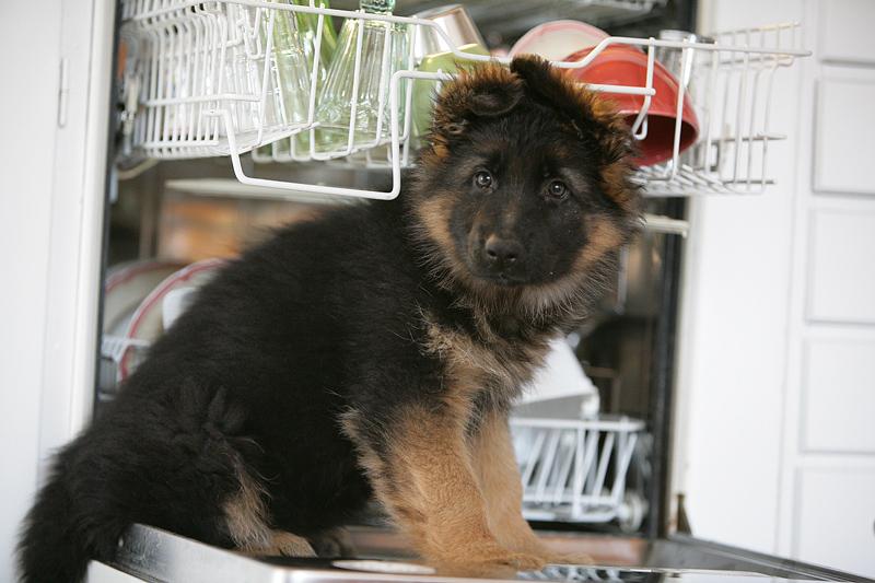 Milla in the dishwasher
