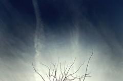 Reach For The Sky (CAUSTlC) Tags: sky tree spring reach 1224mm 1mill