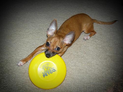 spike frisbee