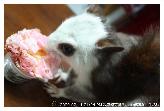 09年二三月小飛鼠Meiz生活照 (2)