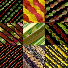 05078 Collage - diagonals 01 (horticultural art) Tags: collage diagonal horticulture