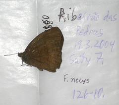 Forsterinaria necys