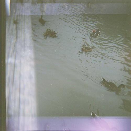Quacks #4