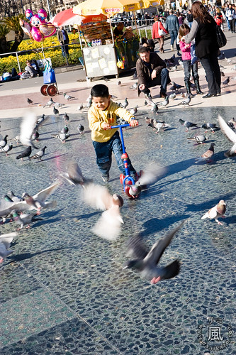 Rushing into the pigeons!