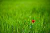 Ababol II (MöB) Tags: primavera amapola villamayor ababol fzfave