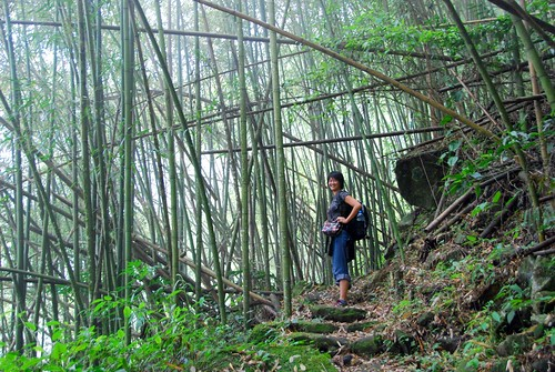 bamboo forest, fenqihu-rueili historic trail