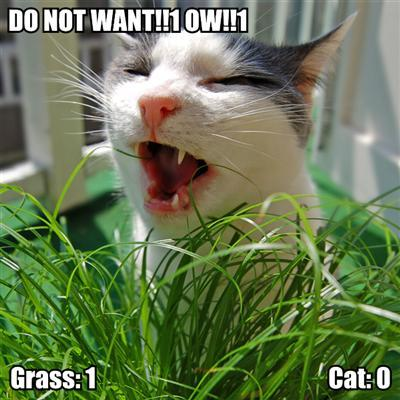 cat-vs-grass