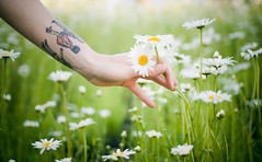 Jillian Poitras, Destroying Nature (Kim // www.kmillerphotographs.com) Tags: california portrait tattoo hand reaching fingers explore daisy delicate redding 2009 picking flowergarden sundialbridge plusone viviangirls photoshootwithjillianpoitras henrydargerwristcuff