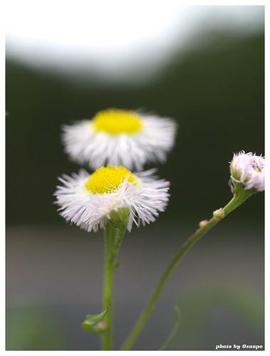 Flowers 20090510 #03