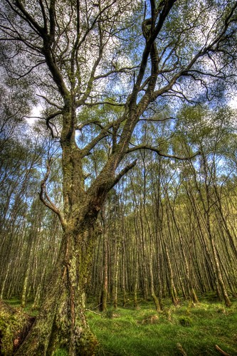 Glendalough Woodland