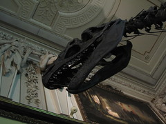 Dinosaur Fossil at the Natural History Museum