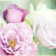 Bouquet (Shana Rae {Florabella Collection}) Tags: roses texture purple 85mm saturday bouquet ttt shanarae florabellatextures