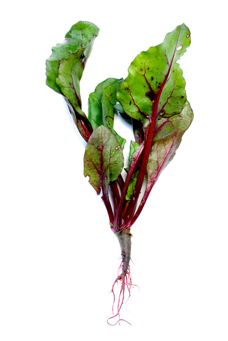 beetroot shoots© by Haalo