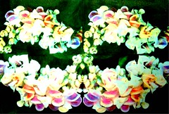 Corkscrew Vine Flower Photo Transferred Four Times (mbtphoto (away a lot)) Tags: from color art by digital photo thomas mary bailey laser transfer concentrate copies creativecity phototransferred alterimages artisticphotosworld marybaileythomas citrasolvtransfers citrasolv