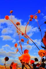 DSC_0813 (HBPhotography2010) Tags: november blue autumn light red sky orange fall home clouds daylight washington nikon day desert farm country happiness ih nikond40