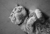 Frasier (Fernando Cabalo) Tags: cat gato persa persiancat thelittledoglaughed miradafavorita thecatwhoturnedonandoff ldlportraits