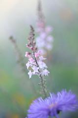 Quiet Wish (KarmenRose) Tags: pink flower macro green floral soft purple lavender wish
