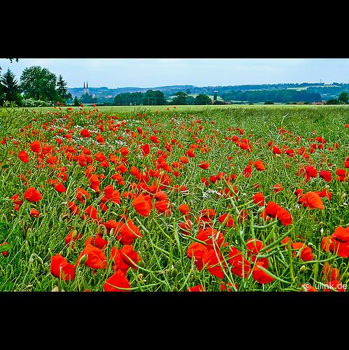 _poppy_greetings