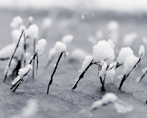 v snow 046 bw
