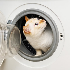 How To Be A Cat, Lesson 9: The Washing Machine (Jim Skea) Tags: home casa funny humor sb600 humour gato washingmachine 2009 engraado whitecat electrolux mizu readeservio flamepoint joogrando speedlightsb600 nikkor50mmf18daf gatobranco mquinadelavarroupa fujifilmfinepixs5pro utilityarea 50mmpets