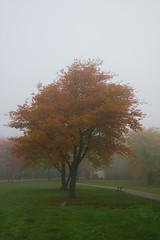 DSC_1556 (mdpayne) Tags: fall boston ma picis october2007