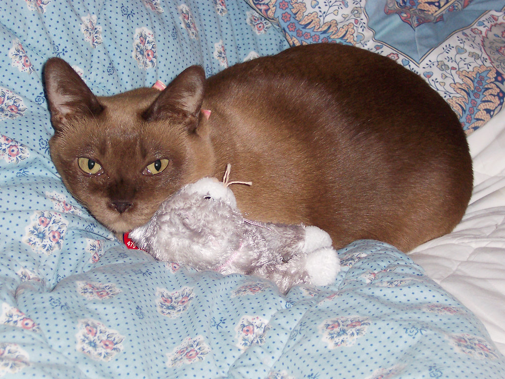 PeeWee and one of her favorite carry-around toys