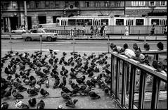 Pigeons (jmvanelk) Tags: hungary pigeons budapest tram communism publictransport lada easterneurope easternblock