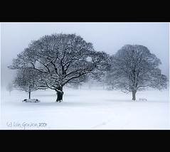 Scottish Winter Scene - Pure and Simple (Magdalen Green Photography) Tags: park trees winter snow scotland cool searchthebest dundee camperdownpark pureandsimple dsc1656 calmnaturescene iaingordon scottishwinterscene