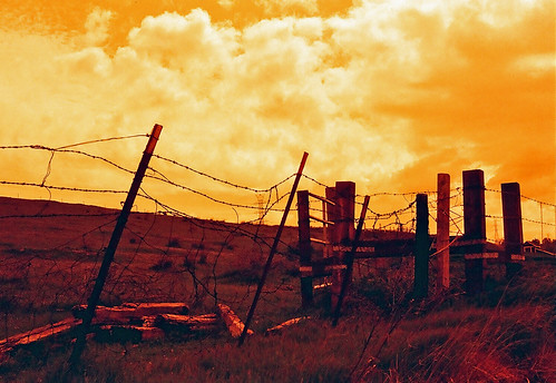 Along the Altamont (Redscale Film)