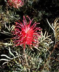 Flor III (Matheus Cremonese) Tags: pink brazil flores minasgerais verde brasil riodejaneiro cores natureza laranja quadro campo bola sinuca fazenda rvores vegetao terespolis moldura marfin matheuscremonese bilharsnooker