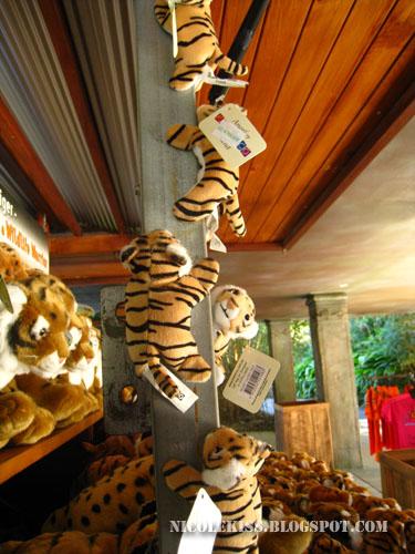 pole climbing tigers