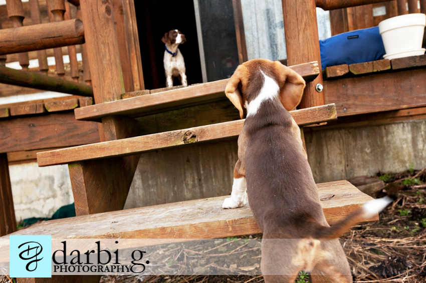 Darbi G photography-dog puppy photographer-_MG_0044-Edit