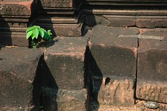 Tiny Plant (KC Toh) Tags: life plant stone 红 石头 绿色 生命 小树