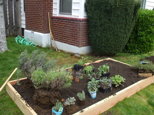 raised bed with plants