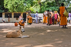 Calling First Dibs on Any Leftovers (debra booth) Tags: dog india hindu tamilnadu ashram copyrighted ramana maharshi thiruvannamalai arunachala sannyasin sanyasin sanyasi sannyasi debrabooth indiandog sriramanamaharshiashram sannyasa