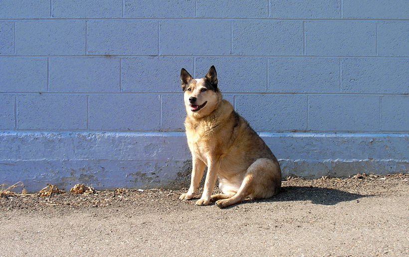 Red Heeler / Blue Wall