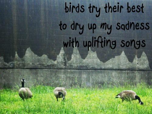 birdstrytheirbest