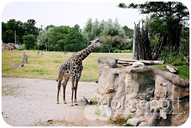 Toldeo Zoo