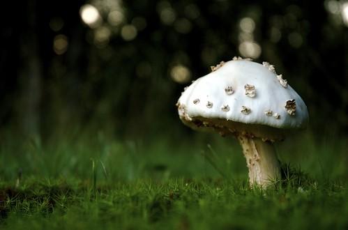 Magic Mushroom, Again
