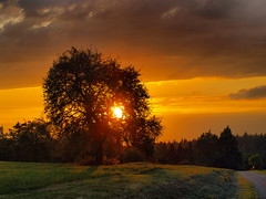 obstbaum in der abendsonne (hlh2108) Tags: trees sunset sky sun green sol field clouds germany landscape atardecer deutschland golden soleil sonnenuntergang natur wiese himmel wolken fields landschaft sonne bume crepuscolo obstbaum abigfave theperfectphotographer worldwidelandscapes