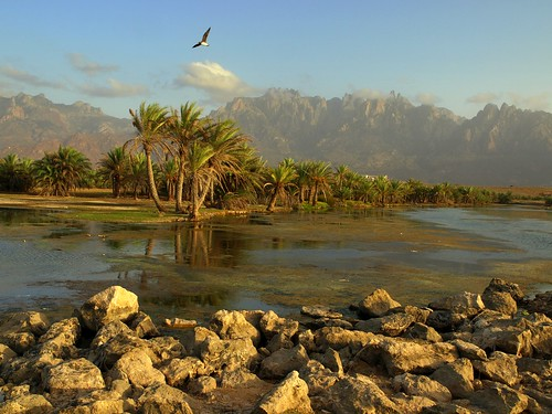 Far Away ~ Socotra Island, Yemen