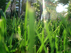 To drown in green (marzii) Tags: life light green nature colors iran urbannature walkingaround marzii