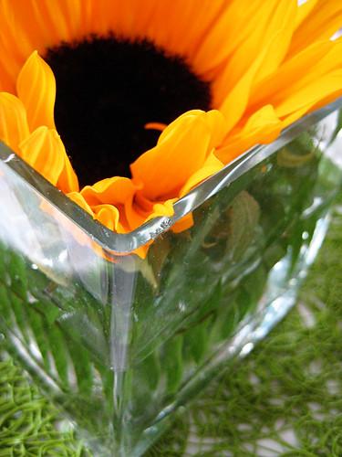 fleur de sol.