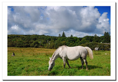 White horse.- (ancama_99(toni)) Tags: pictures trip travel ireland light summer vacation sky horse irish pet naturaleza pets holiday color verde green galway nature animal animals clouds garden landscape geotagged island caballo photography zoo photo interestingness interesting nikon europa europe foto photos picture vert photographic irland eire explore connemara fotos 1855mm fotografia nikkor paysage frontpage 2009 emeraldisle animalplanet animali irlanda irlande verd 1000views fotografas d60 eireann republicofireland 10favs 10faves nikkor1855 explored nikond60 25favs 25faves connemarapark ltytr1 ancama99 interesantsimo saariysqualitypictures