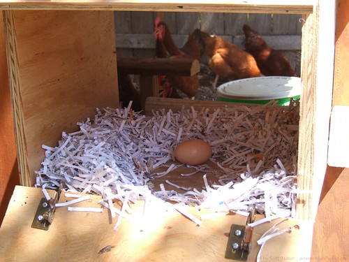 NestingBox 3