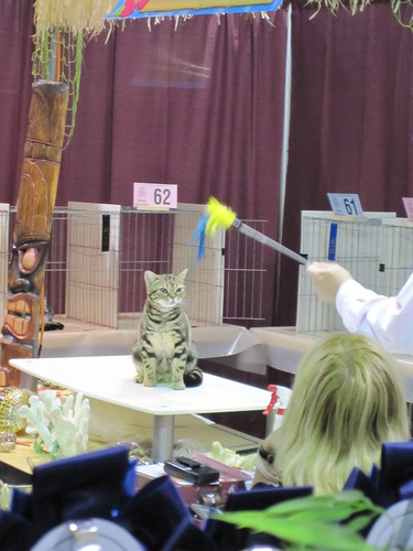 Santa Monica Cat Show - Tiki Time!