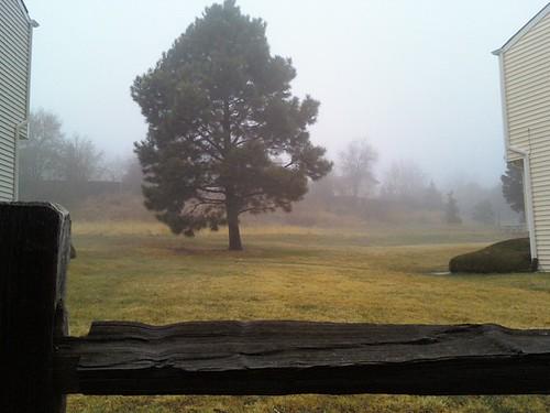 100417--Fog Tree