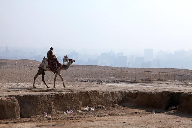 エジプト、ギザ、ラクダとビル群