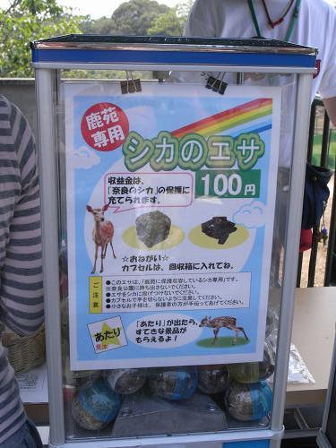 母子鹿の特別公開@鹿苑角きり場-19